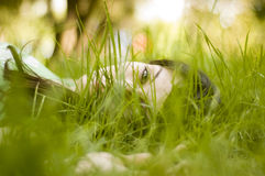 Woman sitting in grass. Young woman sitting on the grass on a spring sunny day Stock Photos
