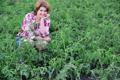 Woman sitting on tomato field in summer. Woman sitting on a tomato field in summer royalty free stock image