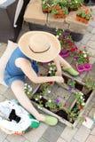 Woman sitting transplanting nursery seedlings Stock Photos