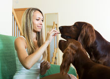 Woman sitting with two Irish setters Royalty Free Stock Image