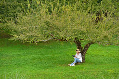 Woman sitting under a tree using tablet computer Stock Photo