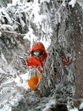 Woman skier with icy trees Stock Photo