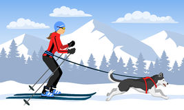 Woman skijoring with her dog . Winter Mountain landsccape Stock Image