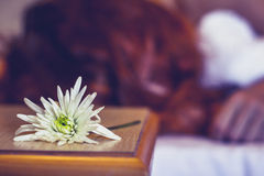 Woman sleeping in hotel room with flower next to her face Stock Image