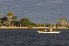 Woman and small dog kayaking in the Gulf of Mexico with birds flying overhead. Florida stock photography