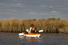 Woman and small dog kayaking in the Gulf of Mexico with birds flying overhead. Florida stock photos