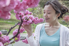 Woman smelling cherry blossoms with eyes closed. Royalty Free Stock Photo