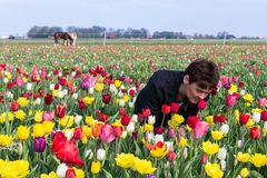Woman Smelling Flowers In A Dutch Tulip Field Stock Image