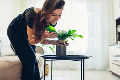 Woman smelling flowers in vase on table. Allergy free. Housewife taking care of coziness in apartment stock image