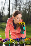 Woman smelling pansy flowers in pot Royalty Free Stock Images