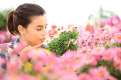 Woman smells the daisies in flowers garden Stock Photos