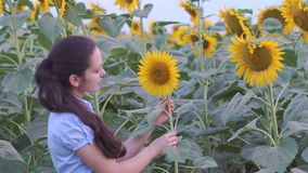 Woman smiling in a field of sunflowers stock footage