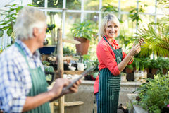 Woman smiling while looking at man in greenhouse Stock Image