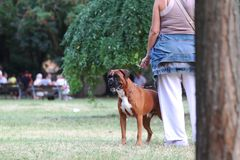 Woman smoking with her Dog in the Park in the end summer stock image