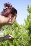 Woman sniffing rosemary shrub Stock Photos