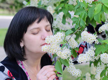 A woman sniffs a flower on a branch bird-cherry Royalty Free Stock Photo
