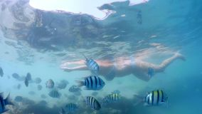 Woman snorkel with coral fish, Red Sea, Egypt. Woman snorkel swim in underwater exotic tropics paradise with school of fish and coral reef, beautiful view of stock footage