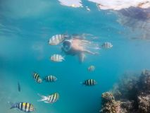 Woman snorkel with school of coral fish, Red Sea, Egypt Royalty Free Stock Photos