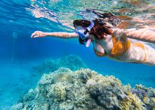 Woman snorkeling above coral reef. Underwater shot of a young woman snorkeling in tropical sea above coral reef stock image