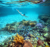 A woman snorkeling in the beautiful coral reef with lots of fish.  royalty free stock photography