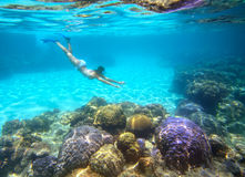 A woman snorkeling in the beautiful coral reef with lots of fish. Vietnam Stock Image