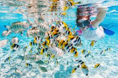 Woman snorkeling with tropical fish Royalty Free Stock Photography