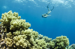 Woman snorkeling on a coral reef Stock Images