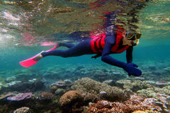 Woman snorkeling dive. In the Great Barrier Reef Queensland Australia stock photos