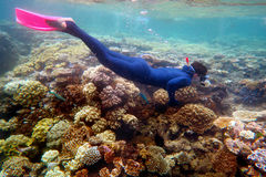 Woman snorkeling dive. In the Great Barrier Reef Queensland Australia royalty free stock image