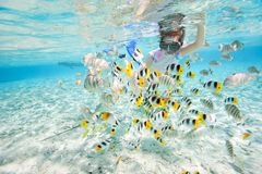 Woman snorkeling with fish Royalty Free Stock Photos