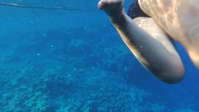 Woman snorkeling stock video footage