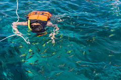 Woman snorkeling with life jackets in andaman sea Royalty Free Stock Image