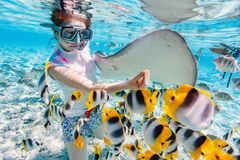 Woman snorkeling with tropical fish Stock Photos