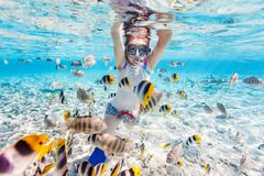 Woman snorkeling with tropical fish Royalty Free Stock Photo