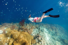 Woman snorkeling. Underwater photo of woman snorkeling and free diving in a clear tropical water at coral reef Royalty Free Stock Image