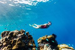 Woman snorkeling. Underwater photo of woman snorkeling and free diving in a clear tropical water at coral reef Stock Image