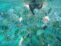 Woman snorkeling with Yellow fish Stock Photography