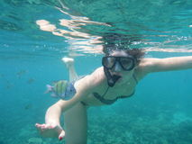 Woman snorkeling with Yellow fish Stock Image