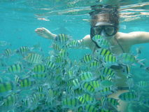 Woman snorkeling with Yellow fish Royalty Free Stock Photography