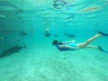 Woman snorkelling with giant trevally fish in Rarotonga Cook Isl stock photo