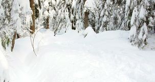 Woman snowboarding through forest 4k. Woman snowboarding through forest during winter 4k stock video footage