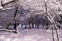 Woman in snowy winter evening park Royalty Free Stock Photos