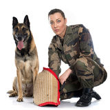 Woman soldier and malinois. In front of white background Stock Image