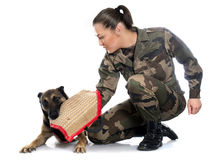 Woman soldier and malinois. In front of white background Royalty Free Stock Image