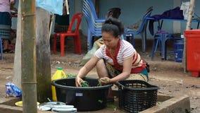 Woman sorting and washing greenery stock video