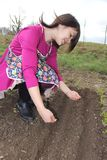 Woman sowing seeds in rows Stock Photography