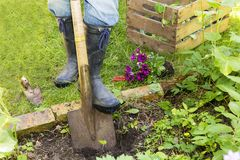 Woman with spade in a garden Stock Photos