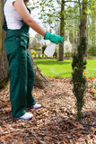 Woman spaying plants Stock Images