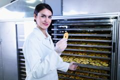 Woman Specialist in Food Quality and Health Control Checking Apples. Woman Specialist Working With Food Drying Chamber Checking Sliced Apples before drying Royalty Free Stock Image