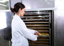Woman Specialist in Food Quality and Health Control Checking Apples. Woman Specialist Working With Food Drying Chamber Checking Sliced Apples before drying Royalty Free Stock Photography